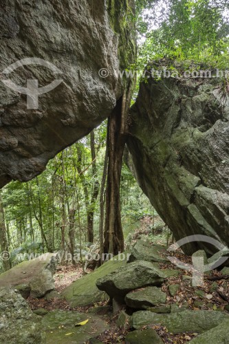 Árvore espremida entre duas grandes rochas na Gruta do archer no Parque Nacional da Tijuca  - Rio de Janeiro - Rio de Janeiro (RJ) - Brasil