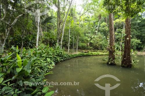 Lago das Fadas no Parque Nacional da Tijuca  - Rio de Janeiro - Rio de Janeiro (RJ) - Brasil