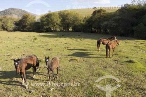 Foto feita com drone de cavalos no pasto - Paraisópolis - Minas Gerais (MG) - Brasil
