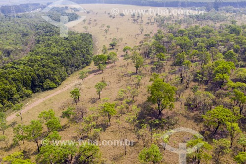Foto feita com drone de mata de Cerrrado remanescente no interior do estado - São Carlos - São Paulo (SP) - Brasil
