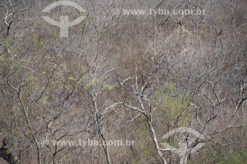 Paisagem do sertão pernambucano no período da seca - Salgueiro - Pernambuco (PE) - Brasil