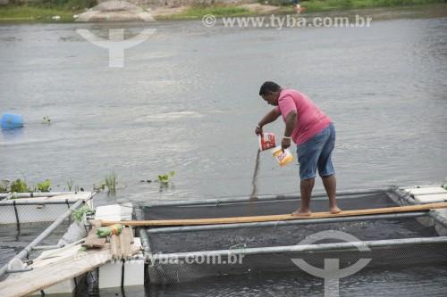 Indígena da etnia Truká alimentando alevinos criados em tanques no Rio São Francisco, aqui denominado Rio Pequeno - Terra Indígena Truká - Cabrobó - Pernambuco (PE) - Brasil