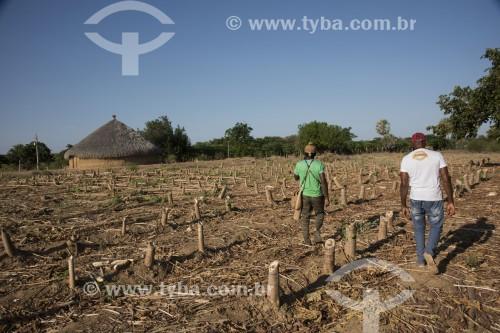 Índios da etnia Truká caminhando entre plantação de mamão na Ilha da Onça - território considerado sagrado - Cabrobó - Pernambuco (PE) - Brasil