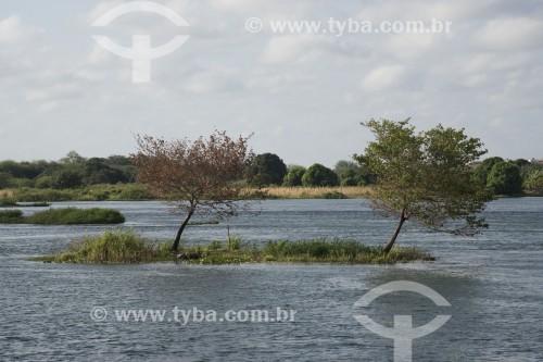 Árvores em ilhota do Arquipélago Assunção no Rio São Francisco - Terra Indígena Truká - Cabrobó - Pernambuco (PE) - Brasil