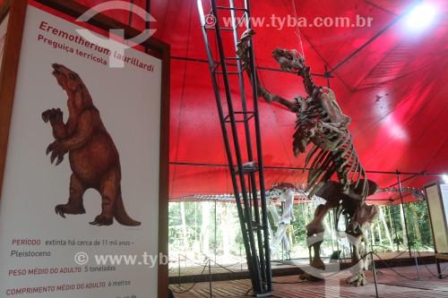 Museu da amazônia (MUSA) - Exposição permanente Passado presente - Esqueleto de um Eremotherium taurillardi, uma preguiça gigante de 4 metros de altura - Manaus - Amazonas (AM) - Brasil