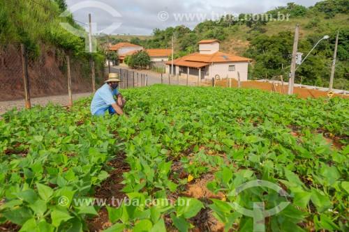 Trabalhador cuidando de horta urbana de feijão - Guarani - Minas Gerais (MG) - Brasil