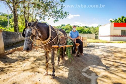 Agricultor transportando cana-de-açúcar em carroça - Utilizando máscara de proteção contra a Covid 19 - Guarani - Minas Gerais (MG) - Brasil