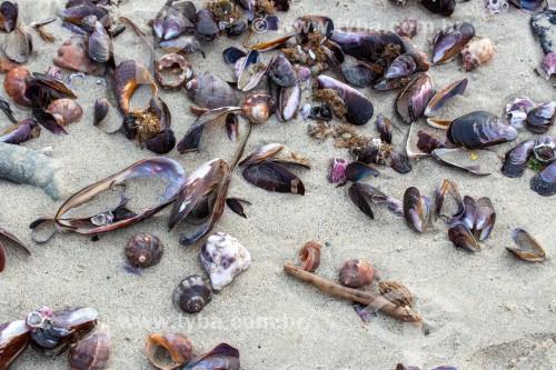 Conchas de mexilhão na Praia de Copacabana - Rio de Janeiro - Rio de Janeiro (RJ) - Brasil