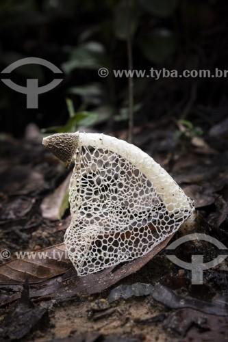 Detalhe de cogumelos (Fungo) - Parque Henrique Lage - mais conhecido como Parque Lage - Rio de Janeiro - Rio de Janeiro (RJ) - Brasil