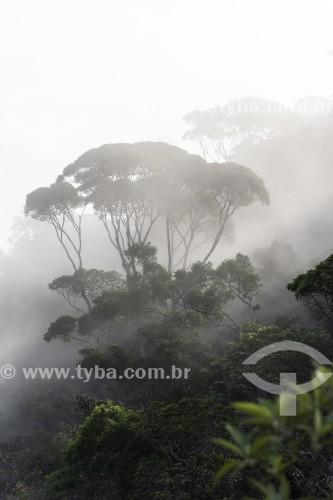 Árvores em meio a neblina - Parque Nacional da Tijuca - Rio de Janeiro - Rio de Janeiro (RJ) - Brasil