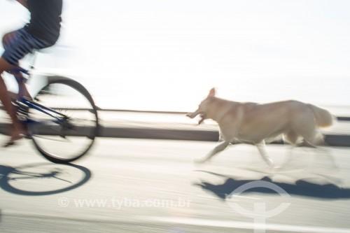 Cachorro seguindo ciclista na ciclovia do calçadão de Copacabana - Rio de Janeiro - Rio de Janeiro (RJ) - Brasil