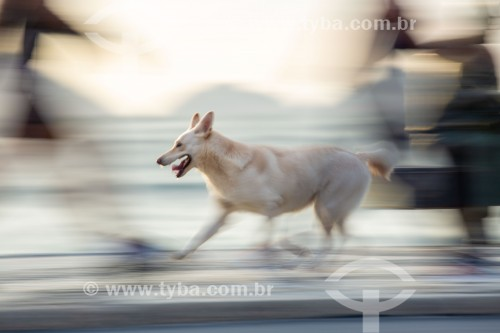 Cachorro correndo no calçadão da Praia de Copacabana  - Rio de Janeiro - Rio de Janeiro (RJ) - Brasil
