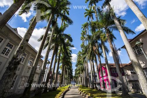 Alameda Brustlein - Joinville - Santa Catarina (SC) - Brasil