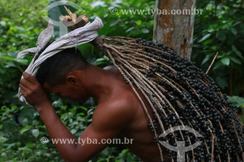 Colheita de açaí na Reserva de Desenvolvimento Sustentável Mamirauá - Uarini - Amazonas (AM) - Brasil