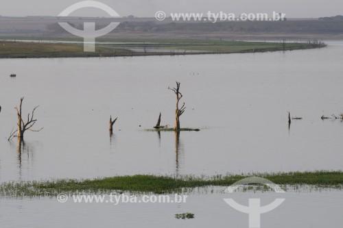 Árvores que ficavam submersas no reservatório de água da Usina Hidrelétrica de Marimbondo com o nível de água mais baixo dos últimos 45 anos - entre os estados de São Paulo e Minas Gerais  - Guaraci - São Paulo (SP) - Brasil