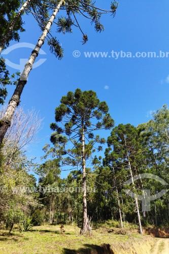 Vale do Alcantilado - Bocaina de Minas - Minas Gerais (MG) - Brasil