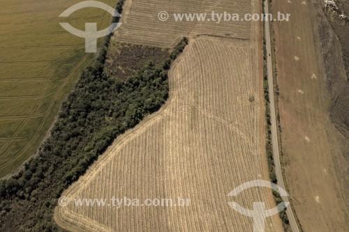 Foto feita com drone de Plantação de milho entre os municípios de Carrancas e Itutinga - Local de transição entre o Cerrado e a Mata Atlântica - Carrancas - Minas Gerais (MG) - Brasil