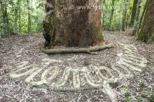 Detalhe de árvore com desenhos de concreto feitos em sua base - Floresta da Tijuca - Parque Nacional da Tijuca - Rio de Janeiro - Rio de Janeiro (RJ) - Brasil