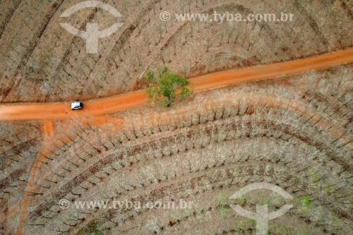 Foto feita com drone de seringueiras com as folhas queimadas, provocada pela geada - Bálsamo - São Paulo (SP) - Brasil