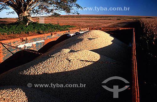 Colheita de soja com grãos armazenados em caçamba de caminhão - PR - Brasil  - Paraná - Brasil