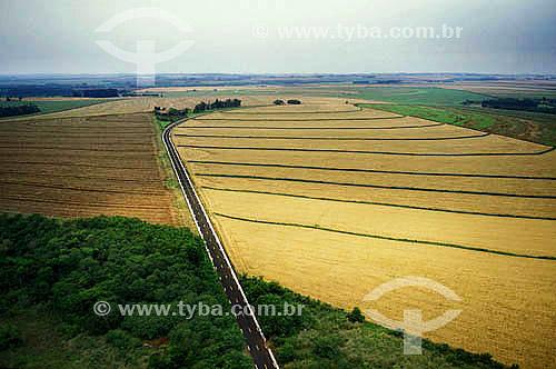 Estrada - plantação de trigo - PR - Brasil  - Foz do Iguaçu - Paraná - Brasil