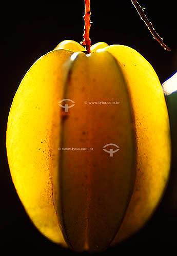 (Averrhoa carambola) Fruta - Carambola