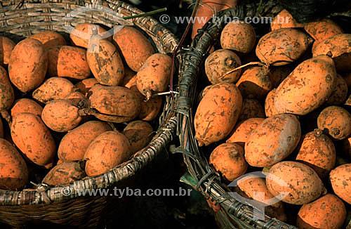 Bacuri - Fruta da região norte Belém - PA - Brasil  - Belém - Pará - Brasil
