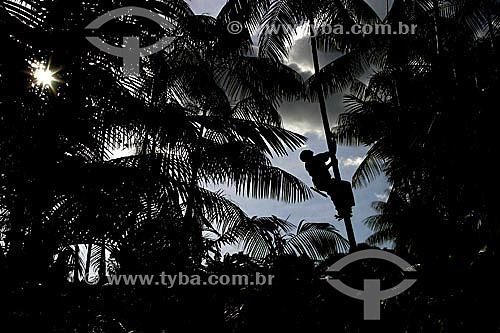 Silhueta de homem subindo a palmeira para colher Açaí - Brasil