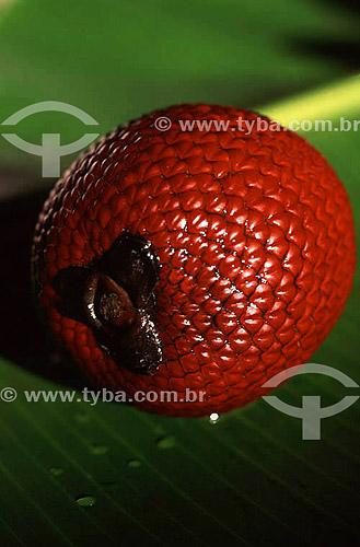 (Mauritia flexuosa) - fruta - Buriti