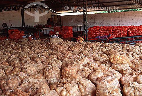 Cebolas armazenadas em sacos - Monte Alto - SP - Brasil  - Monte Alto - São Paulo - Brasil