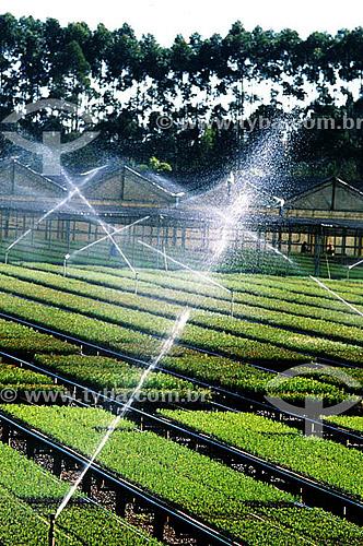 Assunto: Irrigação em plantação para produção de celulose / Local: Paraná / Data: 2002