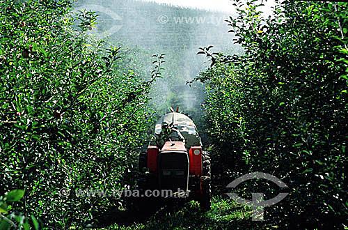 Pulverização em plantação de  maçã - Fraiburgo - SC - Brasil  - Fraiburgo - Santa Catarina - Brasil