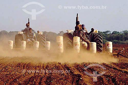 Cultivo mecanizado (Plantadeira), plantação de algodão - Bahia - Brasil. Data: 2001