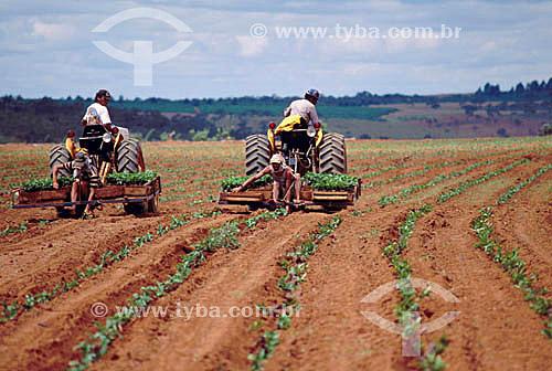 Agricultura -  Máquinas usadas no plantio de café - Coromandel - Minas Gerais - Brasil  - Coromandel - Minas Gerais - Brasil