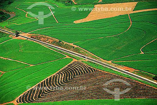 Assunto: Vista aérea de plantação de cana de açúcar (canavial)  / Local: Itapira - SP - Brasil / Data: 2006