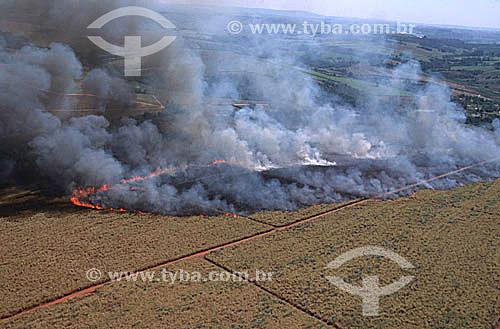 Vista aérea de queimada em plantação de cana de açúcar - Região de Bauru - SP - Brasil  - Bauru - São Paulo - Brasil