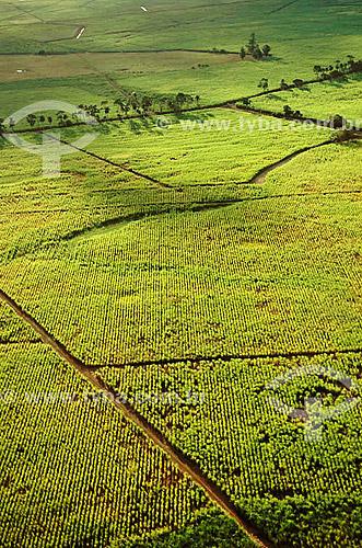 Vista aérea de canavial (cana-de-açúcar) - Campos - RJ - Brasil  / Data: 2009