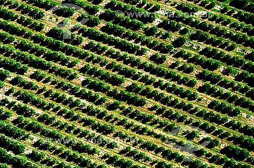 Vista aérea de pomar - Itápolis - SP - Brasil / Data: 1996
