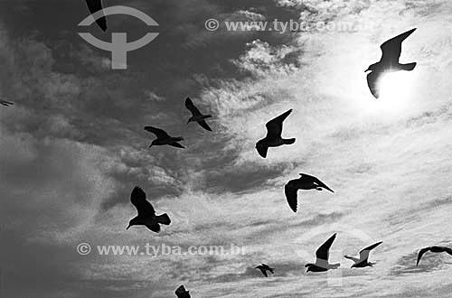 Silhueta de gaivotas voando - Brasil