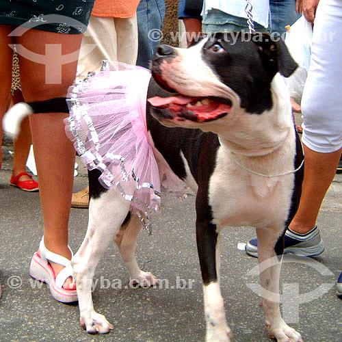 Cachorro fantasiado no carnaval 2005 - Rio de Janeiro - RJ - Brasil  foto digital  - Rio de Janeiro - Rio de Janeiro - Brasil