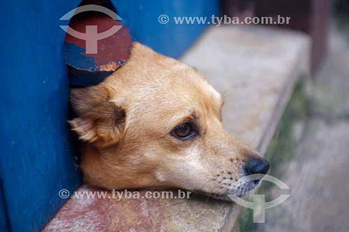 Cachorro vira-lata com cabeça em buraco