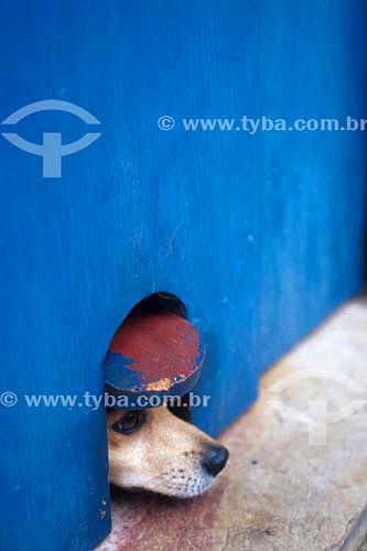 Cachorro vira-lata com cabeça em buraco  - Rio de Janeiro - Rio de Janeiro - Brasil