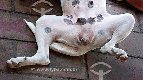 Órgão reprodutor de cadela no Cio - Olinda - Set./2007  - Olinda - Pernambuco - Brasil