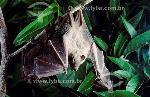 Morcego pendurado em tronco de árvore