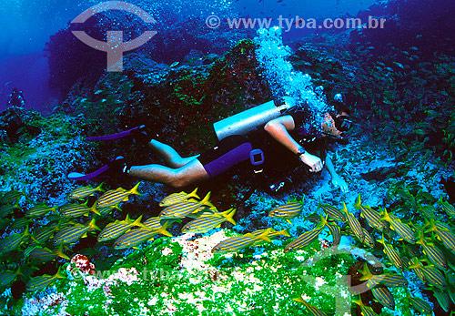 Mergulhador com cardúme de Xiras (Haemulon chrysargyreum) - Mar - Fernando de Noronha - PE - Brasil / Data: 2007
