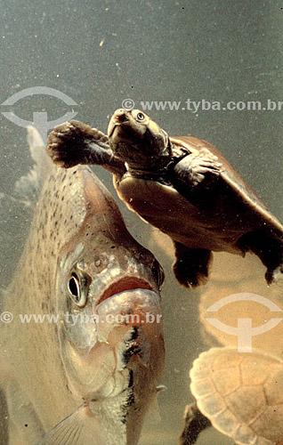 Tartaruga e peixe - Brasil
