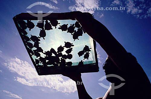 Projeto de preservação de tartarugas - Amazônia - Brasil