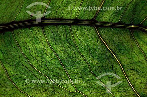 Detalhe de uma folha