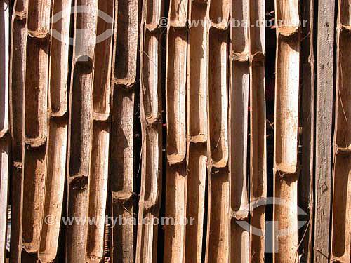 Cerca de Bambu na beira do Rio São Francisco nas proximidades da cidade de Andrequeiçé - MG - Brasil região onde Guimaraes Rosa se inspirou para escrever o livro Grande Sertão Veredas  - Três Marias - Minas Gerais - Brasil