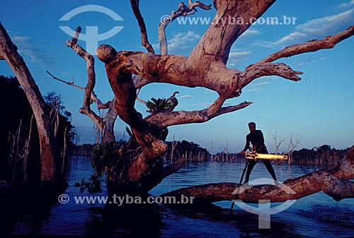 Assunto: Ambiental - Homem com serra elétrica em cima de tronco de árvore em inundação da construção da Hidrelétrica Tucuruí / Local: Tucuruí - PA - Brasil / Data: Década de 80